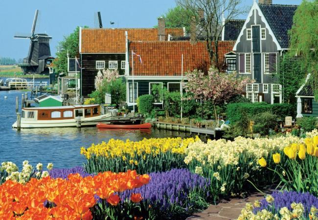 Puzzle Jumbo Tulipanes en Holanda de 1000 Piezas