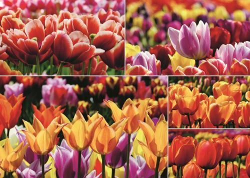 Puzzle Jumbo  Tulipanes Holandeses de 1000 Piezas