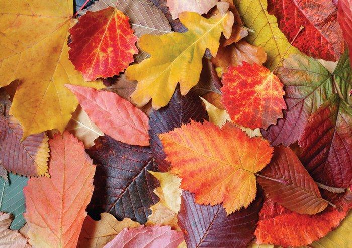 Puzzle Magnolia Hojas de Colores de 1000 Piezas