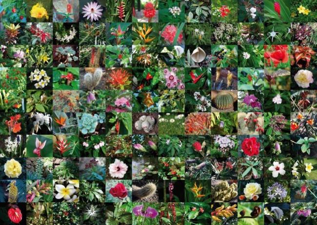 Puzzle Piatnik Collage de Flores de 1000 Piezas