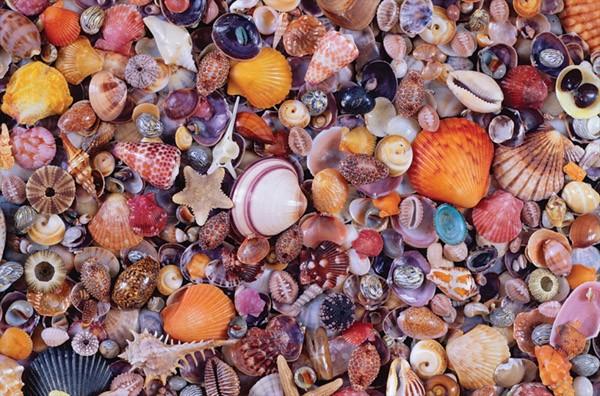 Puzzle Piatnik Conchas de Mar de 1000 Piezas