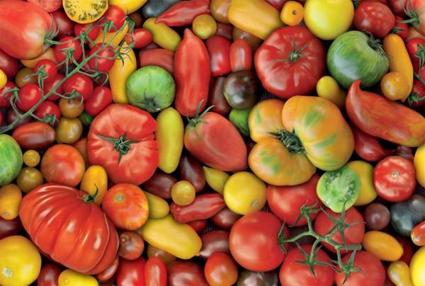 Puzzle Piatnik Tomates de 1000 Piezas