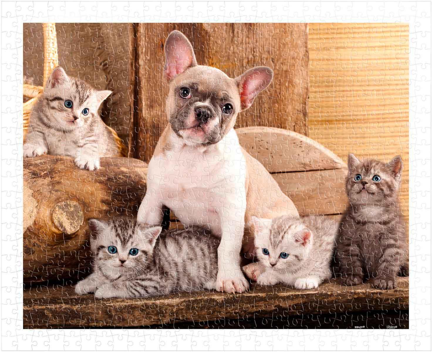 Puzzle Pintoo Pequeños Gatitos y Un Perro de 500 Piezas