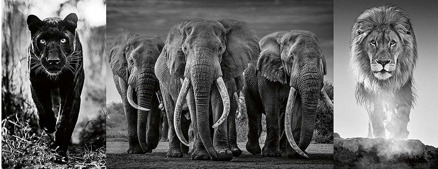 Puzzle Ravensburger Tríptico Pantera, Elefantes y León de 1000 P