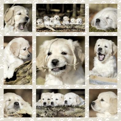 Puzzle Schmidt Cachorros de 1000 Piezas