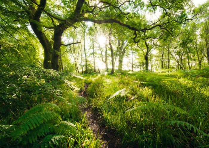 Puzzle Schmidt Camino del Bosque Encantado de 1000 Piezas