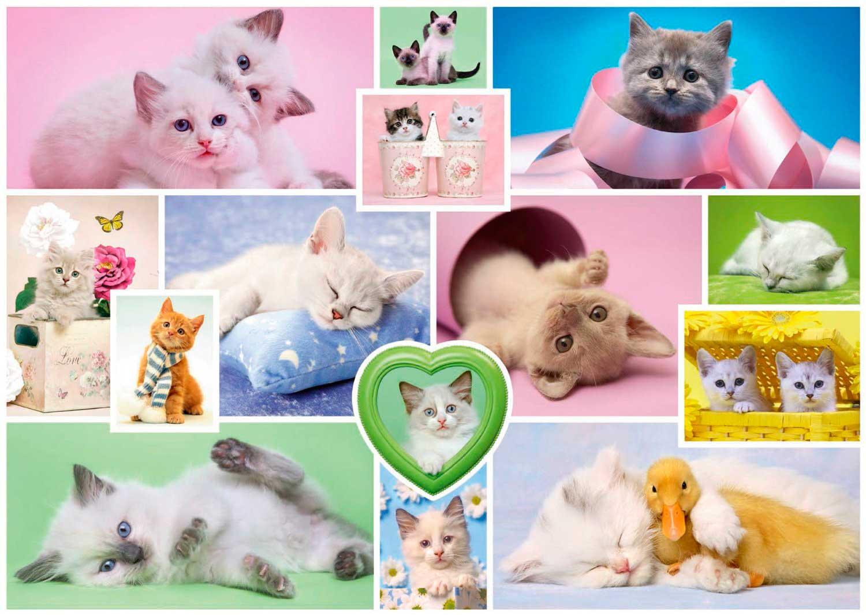 Puzzle Schmidt Collage de Gatos de 1000 Piezas