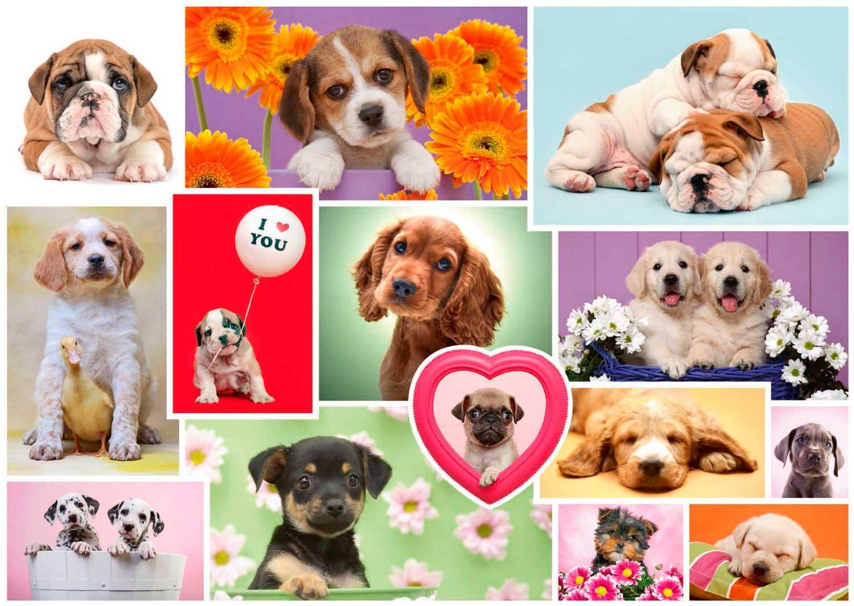 Puzzle Schmidt Collage de Perros de 1000 Piezas