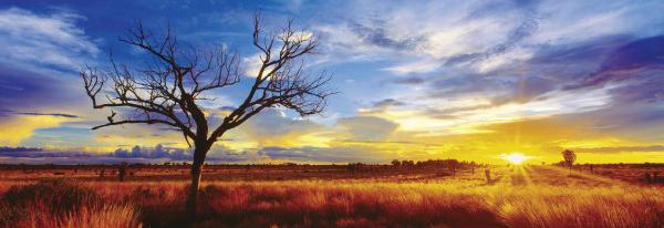 Puzzle Schmidt Desierto Oak al Atardecer, Australia de 1000 Piez