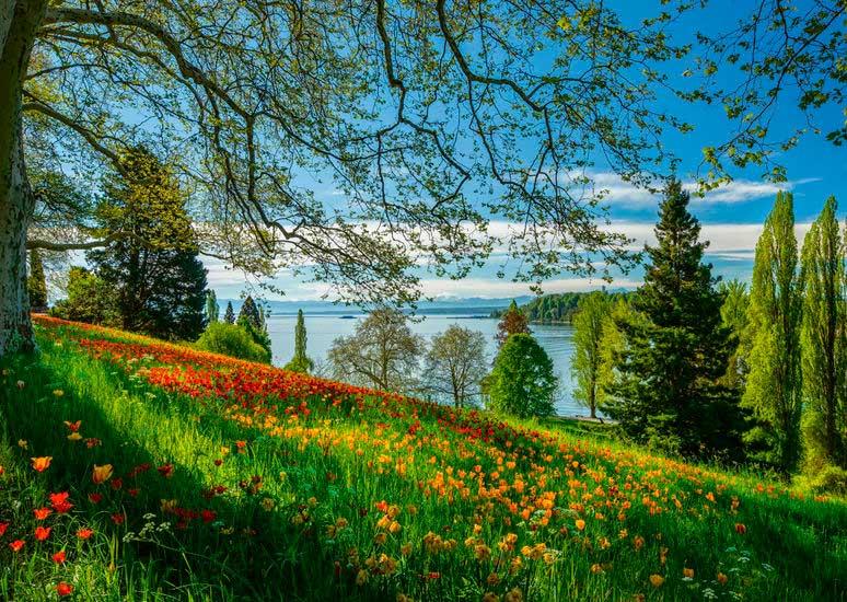 Puzzle Schmidt Floración de Tulipanes, Isla Mainau de 1000 Pzs
