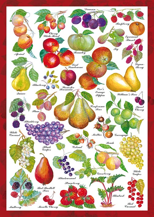 Puzzle Schmidt Jardín Frutal de 1000 Piezas