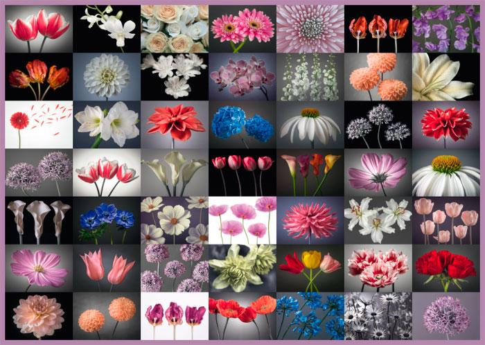 Puzzle Schmidt Mix de Flores de 2000 Piezas