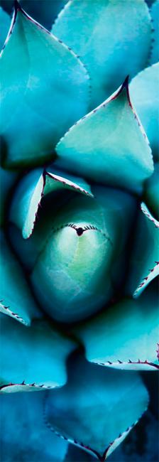 Puzzle Schmidt Rosa Azul de 1000 Piezas