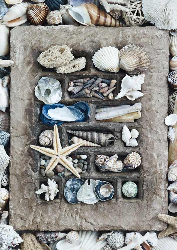 Puzzle Schmidt Conchas de Mar de 500 Piezas