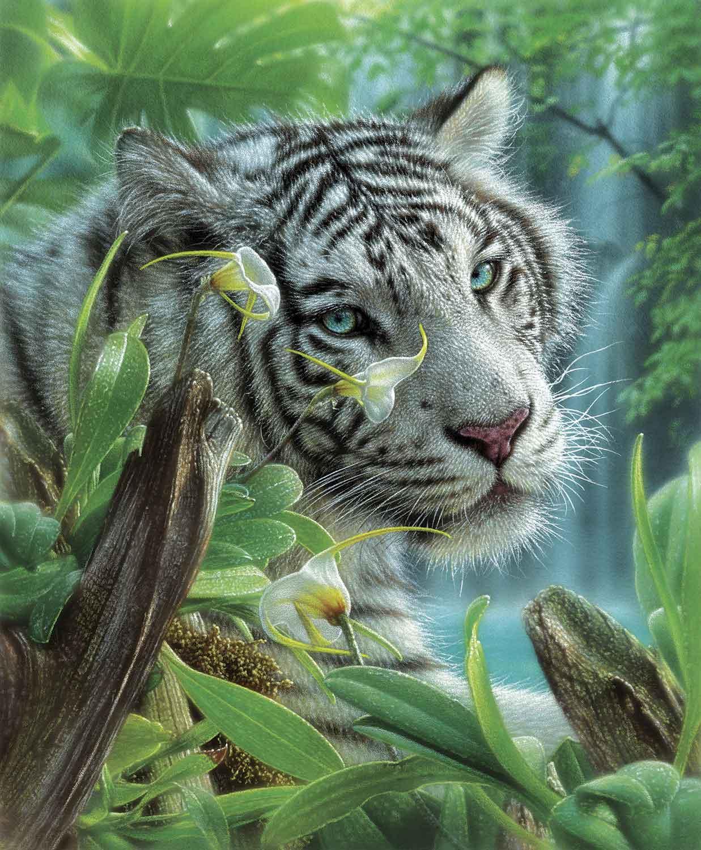 Puzzle SunsOut Tigre Blanco del Edén de 1000 Piezas
