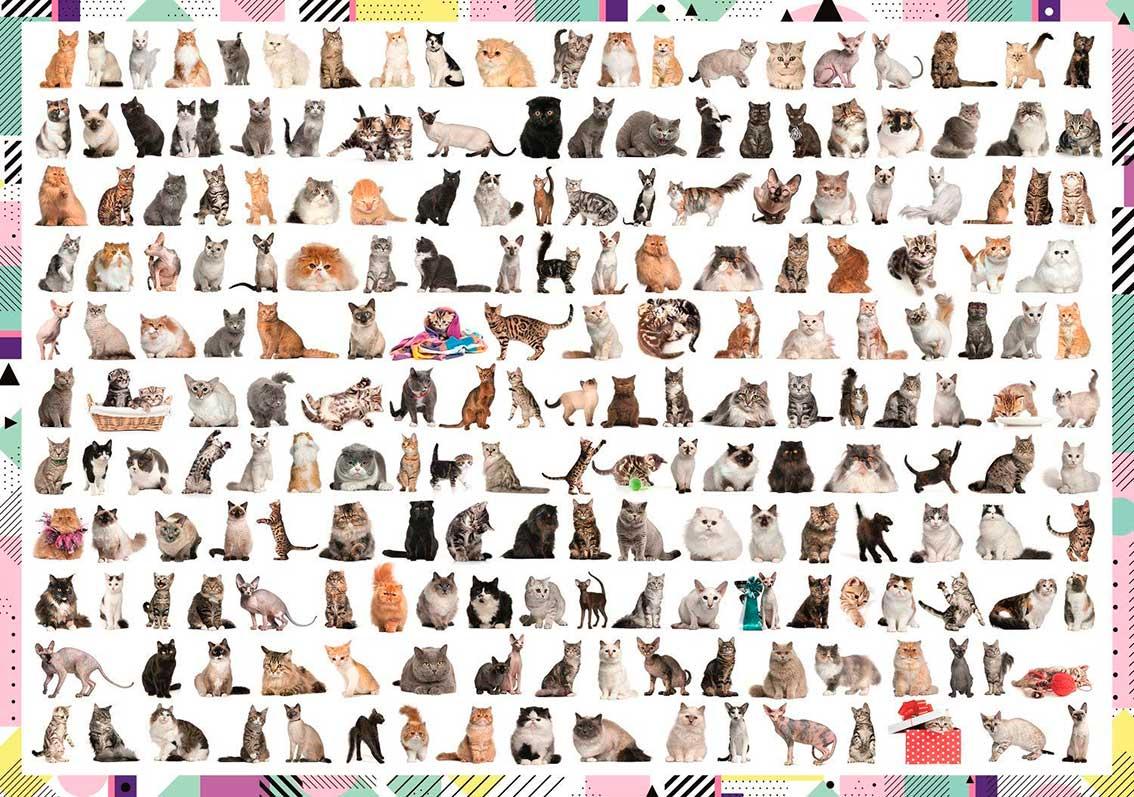 Puzzle Trefl 208 Gatos de 1000 Piezas