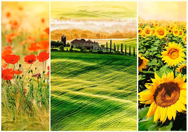 Puzzle Trefl El Sol de la Toscana de 1000 Piezas