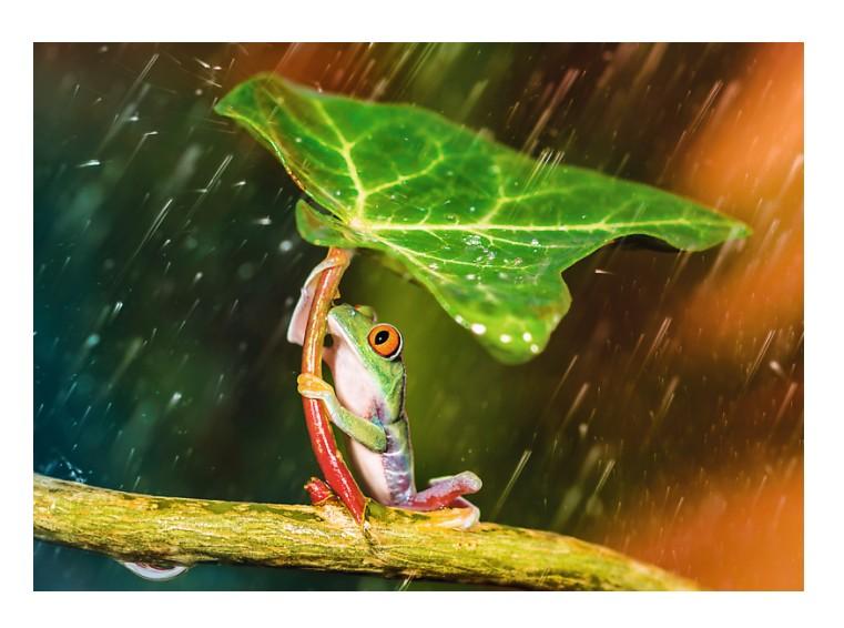 Puzzle Trefl Paraguas Verde de 500 Piezas