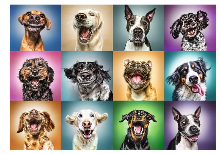 Puzzle Trefl Retratos Divertidos de Perros de 1000 Piezas